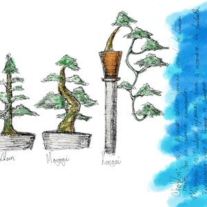 sketches_3_bonsai_55167.jpg