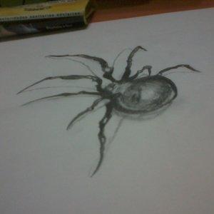 Spidercamel