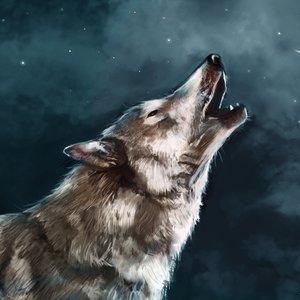 wolf_55685.jpg