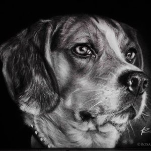 arte_perro_beagle_56015.jpg