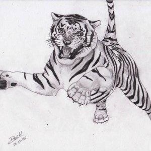 tigre_a_lapiz_48329.jpg