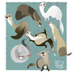 I Love Ferrets!