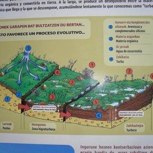 panel_informativo_con_dibujo_de_turbera_58124.jpg