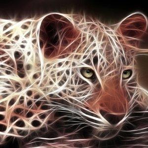 tigre_59255.jpg