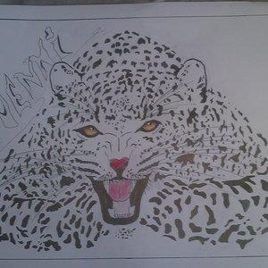leopardoo_59574.jpg