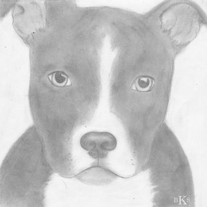 pit_bull_cachorro_60061.jpg