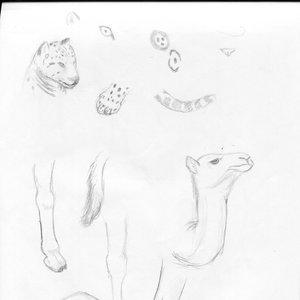 bocetos_de_animales_60111.jpg