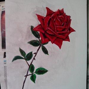 rosa_en_proceso_62842.jpg