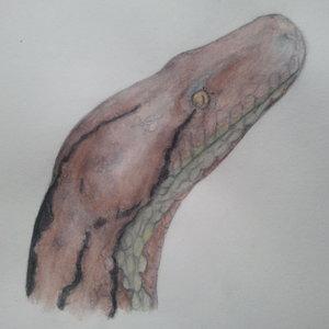 python_48981.jpg