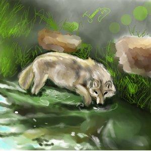 wolfwater_64367.jpg