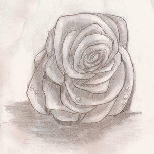 rosa_64711.jpg