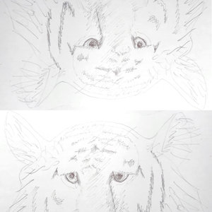 experimento_tigre_dibujar_con_el_hemisferio_derecho_del_cerebro_65812.jpg