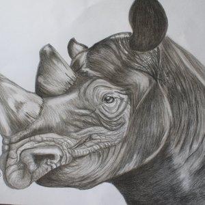 rinoceronte_66368.jpg