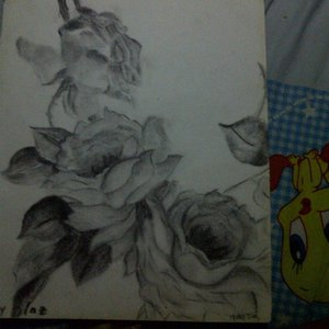 rosas_66377.jpg