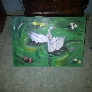 cisnes_en_el_lago_66751.jpg