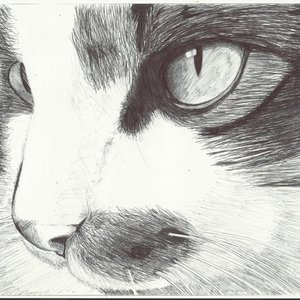 gato_realista_66753.jpg
