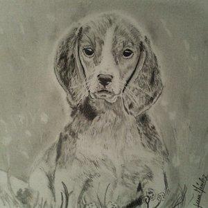 retrato_de_cachorro_beagle_67008.jpg