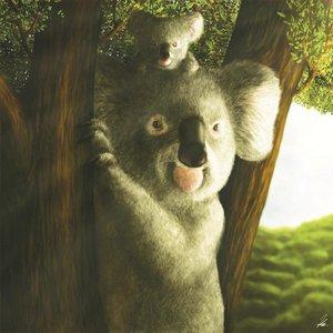 koala_67569.jpg