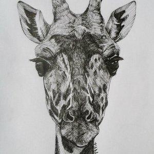 la_girafe_49502.jpg