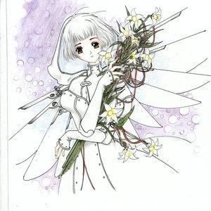 clover_67626.jpg