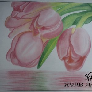 reflejo_de_tulipanes_67716.jpg
