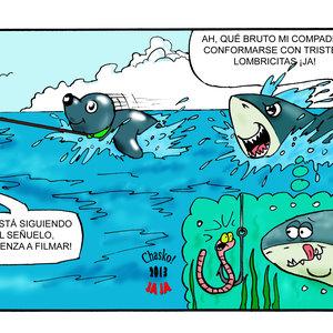 tiburonadas_68178.jpg