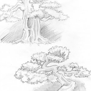 bonsai_passion_68801.jpg