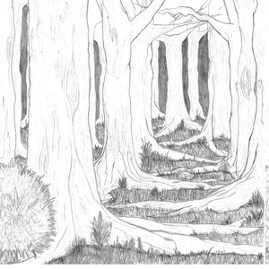forest_49707.jpg
