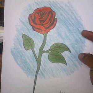 rosa_con_lapiz_y_crayones_69472.jpg
