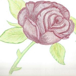 rosa_69776.jpg
