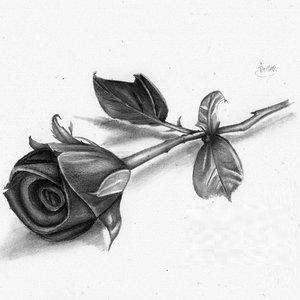 rosa_xd_71145.jpg
