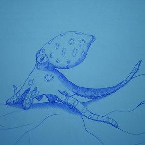 octopus_50351.JPG