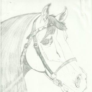 caballo_51254.jpg