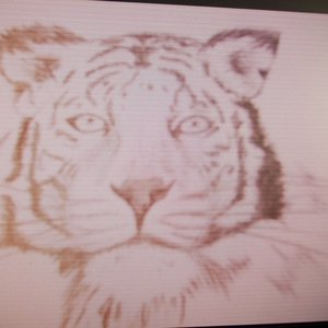 tigre_blanco_carboncillo_51342.JPG