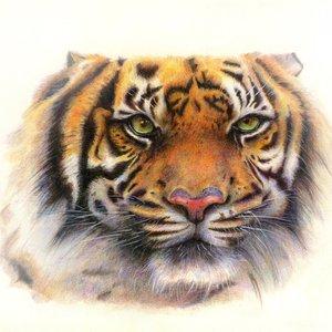 tigre_de_bengala_51428.jpg