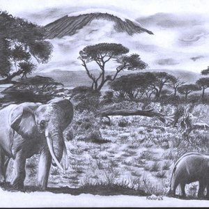 sabana_africana_51505.jpg
