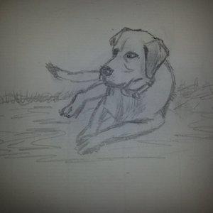 Mi perro Zas