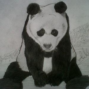 panda_48041.jpg