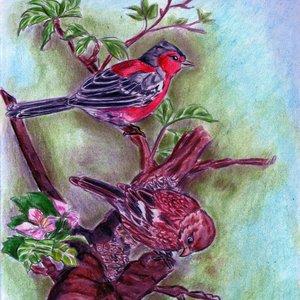 aves_53740.jpg