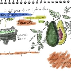 sketches_2_aguacate_54361.jpg