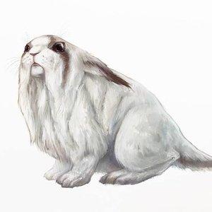 hamster_blanco_gigante_white_giant_hamster_77836.jpg