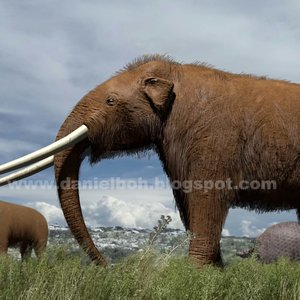 mastodontes_72323.jpg