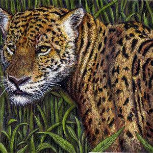 jaguar_78275.jpg