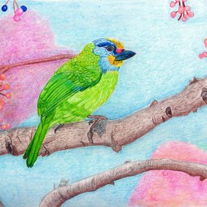 bird_78364.jpg