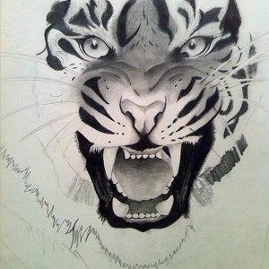 tigre_78508.jpg