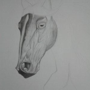 caballo_78628.jpg