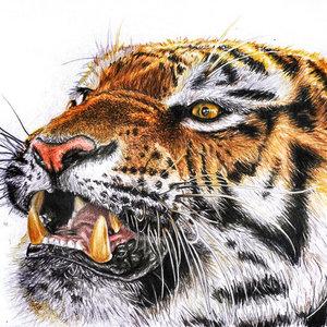 tigre_79646.jpg