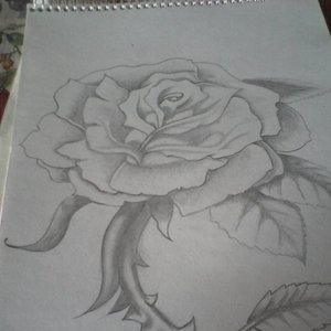 rosa_72532.jpg