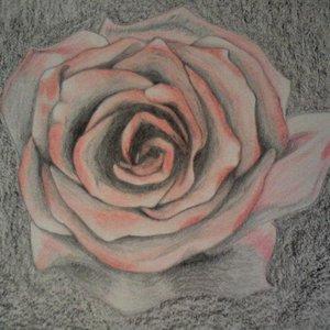 rosa_a_crayola_72533.jpg