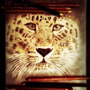 leopardo_80158_0.jpg